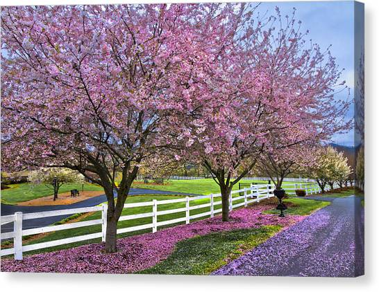 Andrew Canvas Print - In The Pink by Debra and Dave Vanderlaan