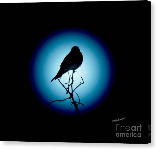 In The Spotlight Canvas Print by Timothy Clinch