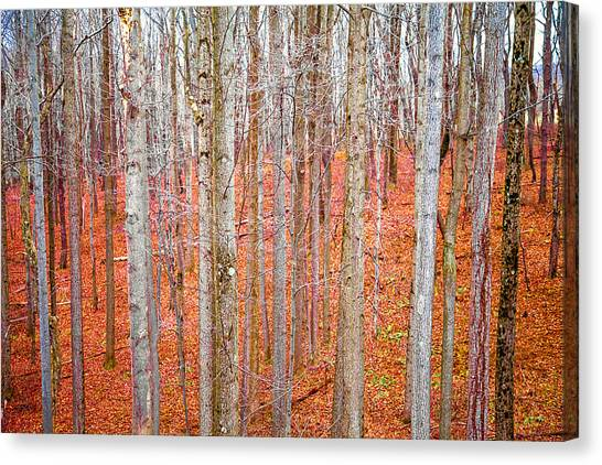 In The Sticks Canvas Print