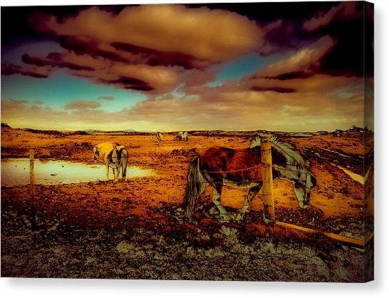 In The Tolt Canvas Print by Roger Chenery