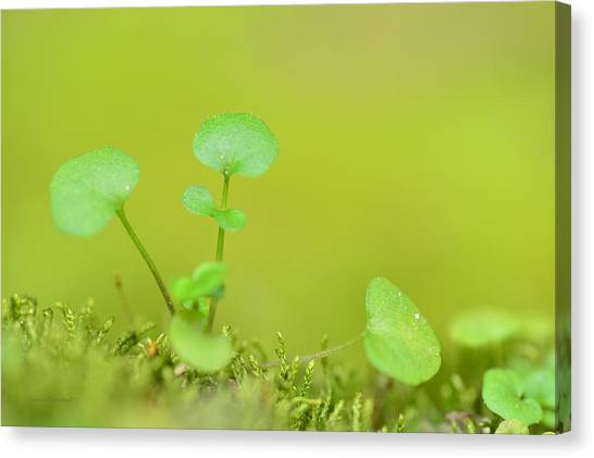 St. Patricks Day Canvas Print - In The Valley Of The Leprechauns by Donna Blackhall