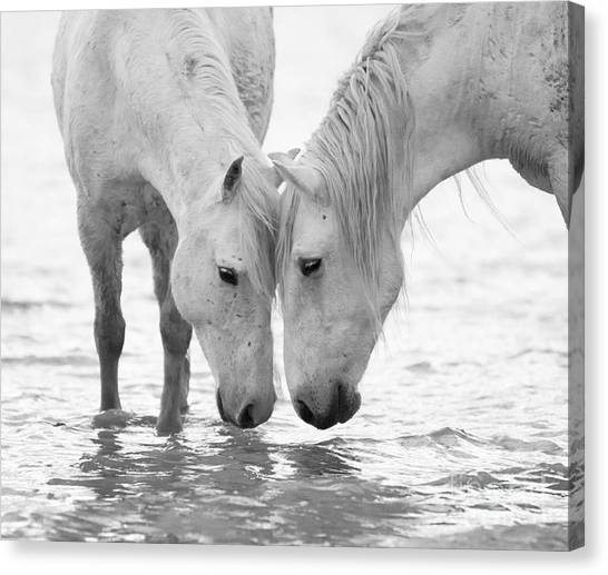 Black and white horse canvas print in the water at dawn ii by carol walker