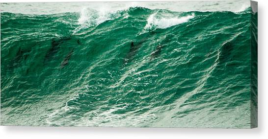 Bottlenose Dolphins Canvas Print - In The Wave by Alistair Lyne