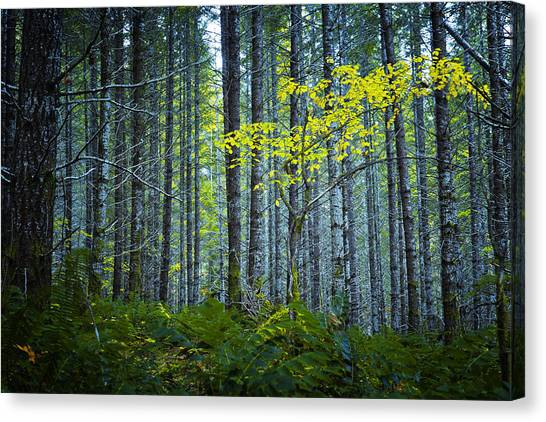 Canvas Print featuring the photograph In The Woods by Belinda Greb