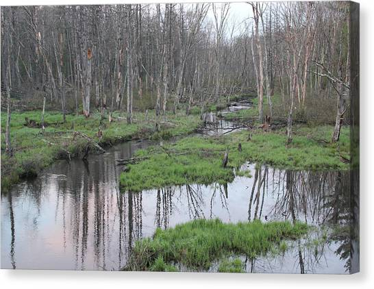 In The Woods Canvas Print by John Ricard jr
