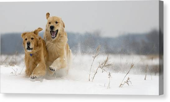 In Their Element Canvas Print