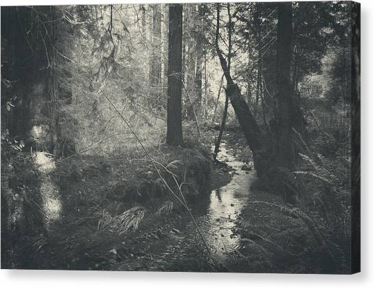 Redwood Forest Canvas Print - In This Silence by Laurie Search