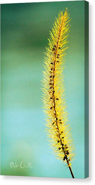 Plant Canvas Print - In Time by Bob Orsillo