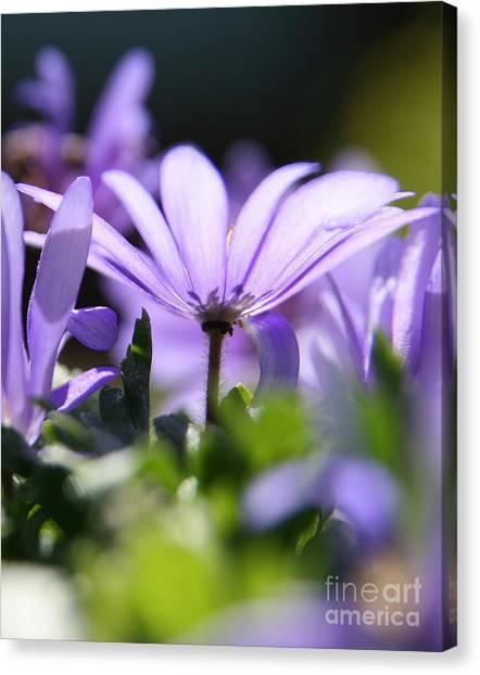 Floral Purple Light  Canvas Print
