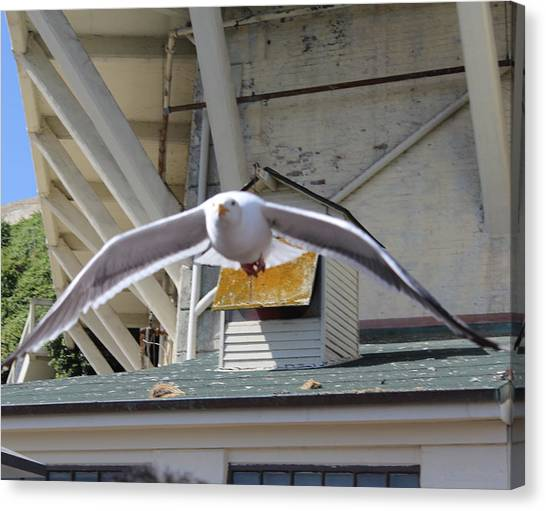 Incoming Seagull Canvas Print