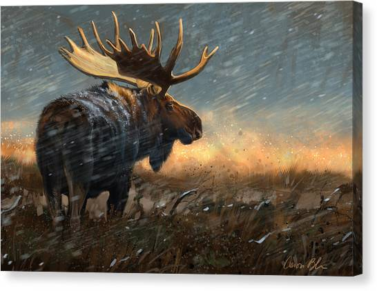 Moose Canvas Print - Incoming Storm by Aaron Blaise