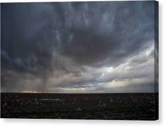Incoming Storm Over A Cotton Field Canvas Print
