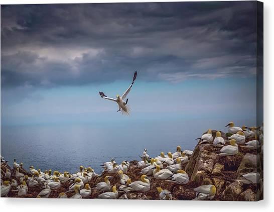 Ocean Cliffs Canvas Print - Incomming by Kieran O Mahony