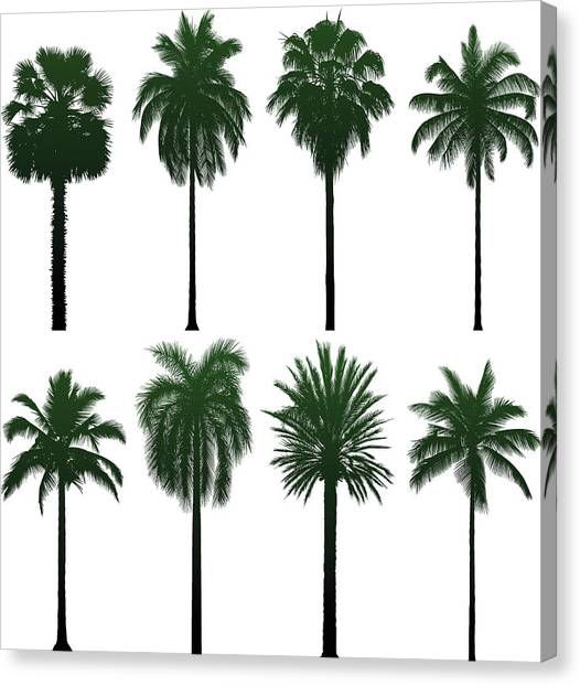 Incredibly Detailed Palm Trees Canvas Print by Leontura