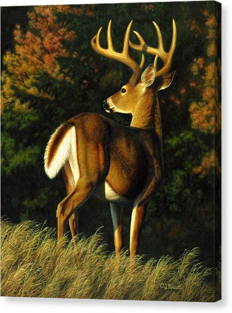 White-tailed Deer Canvas Print - Whitetail Buck - Indecision by Crista Forest