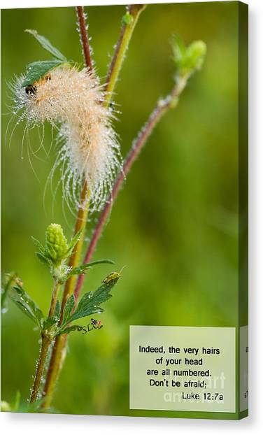 Caterpillers Canvas Print - Indeed by Sandra Clark