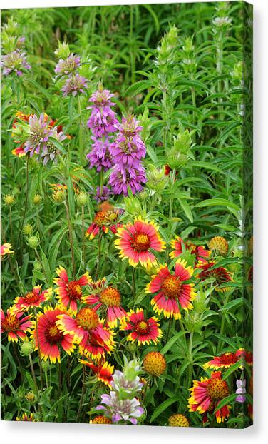Indian Blankets And Lemon Horsemint Canvas Print