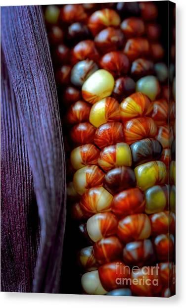 Indian Corn Canvas Print - Indian Corn Autumn by Henry Kowalski