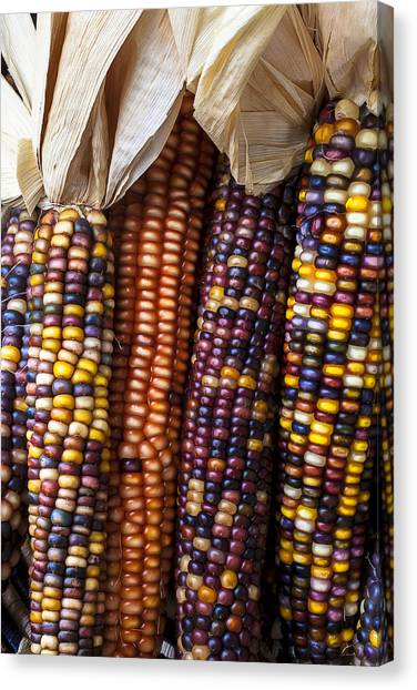 Indian Corn Canvas Print - Indian Corn Close Up by Garry Gay