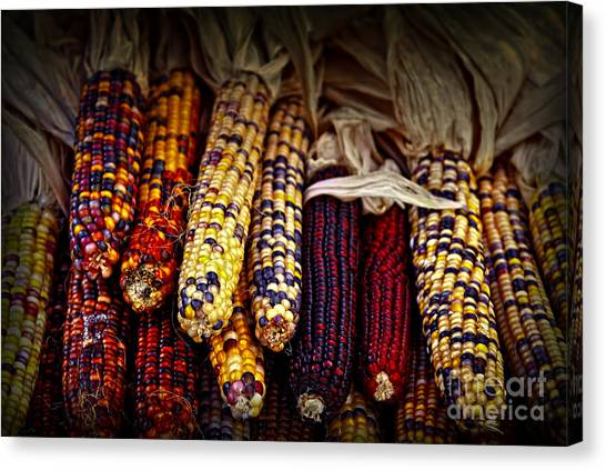 Vegetables Canvas Print - Indian Corn by Elena Elisseeva