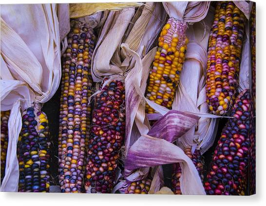 Indian Corn Canvas Print - Indian Corn Harvest by Garry Gay