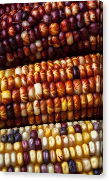 Corn Canvas Print - Indian Corn Harvest Time by Garry Gay
