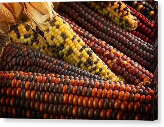 Indian Corn Canvas Print - Indian Corn by Mark McKinney