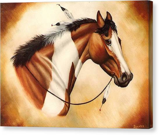 Indian Pony Canvas Print by Kay Sparks