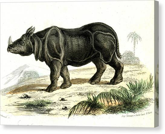 One Horned Rhino Canvas Print - Indian Rhinoceros by Collection Abecasis