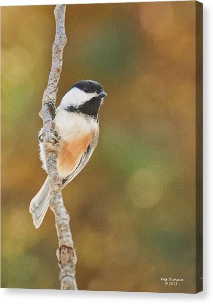 Indian Summer Chickadee Canvas Print