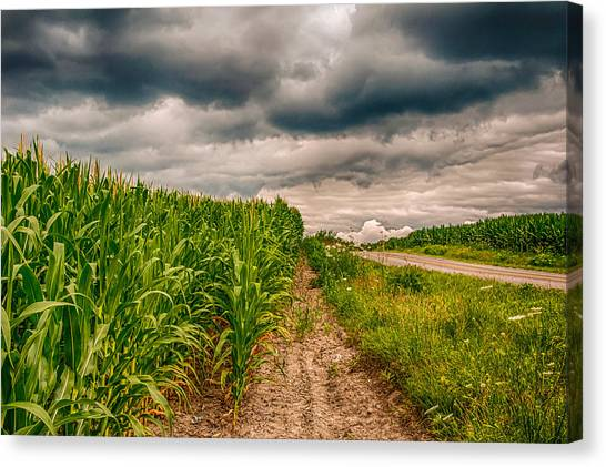Indiana - Corn Country Canvas Print