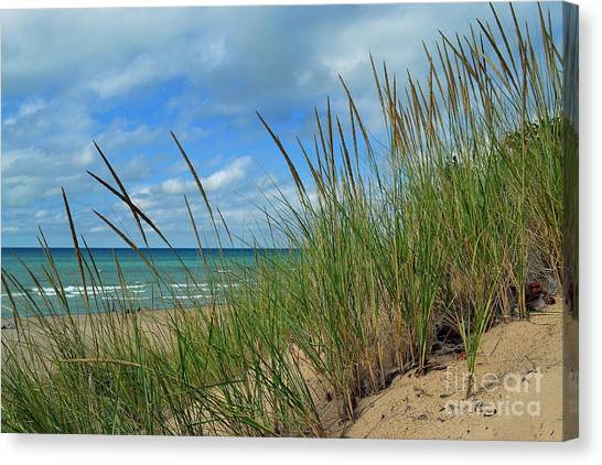 Indiana Dunes Sea Oats Canvas Print
