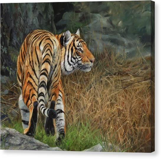 Indo Canvas Print - Indo-chinese Tiger by David Stribbling