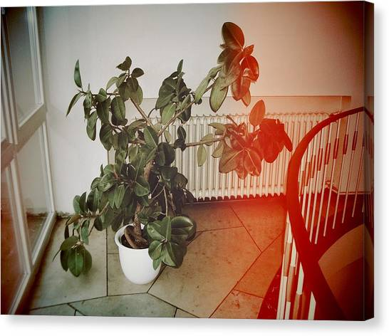 Largemouth Bass Canvas Print - Indoor Plant Standing In The Hallway by Matthias Hauser