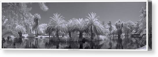 Infrared On A Sunny Afternoon Canvas Print