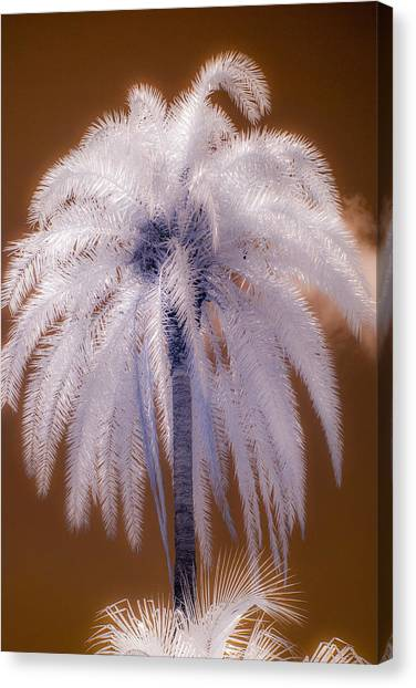 Infrared Palm Tree Canvas Print