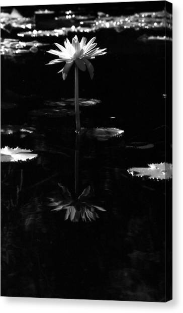 Infrared - Water Lily 03 Canvas Print