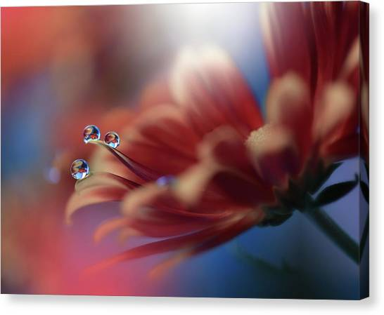 Drops Canvas Print - Inmost... by Juliana Nan