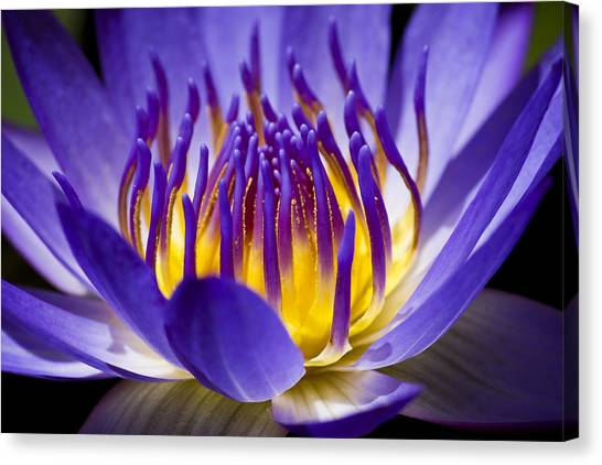 Canvas Print featuring the photograph Inner Glow by Priya Ghose