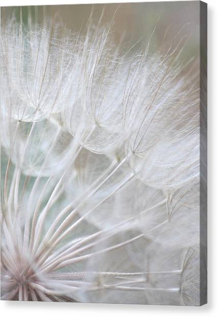 Innocence Canvas Print