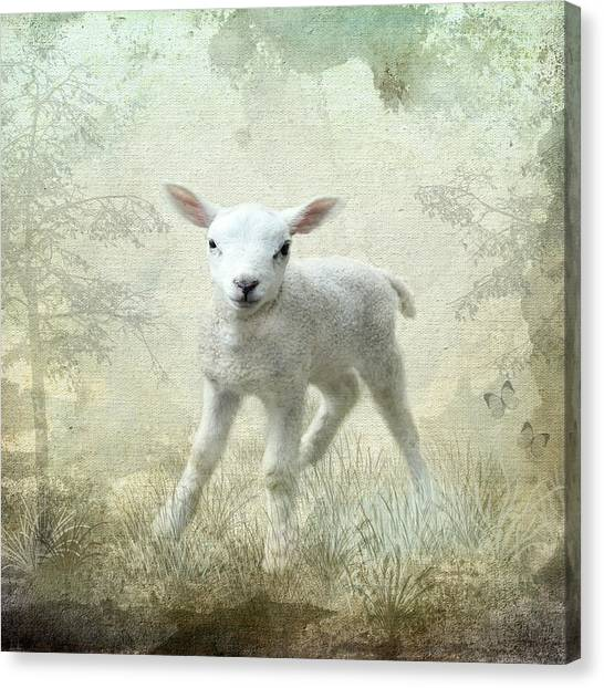 Innocent					 Canvas Print