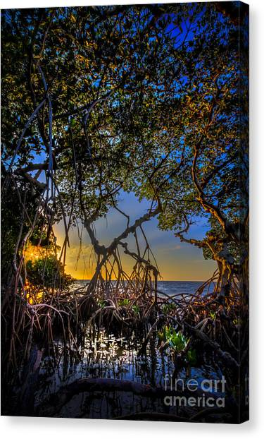 Tampa Bay Rays Canvas Print - Inside Looking Out by Marvin Spates