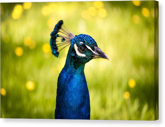 Large Birds Canvas Print - Instagram Photo by Casey Merrill