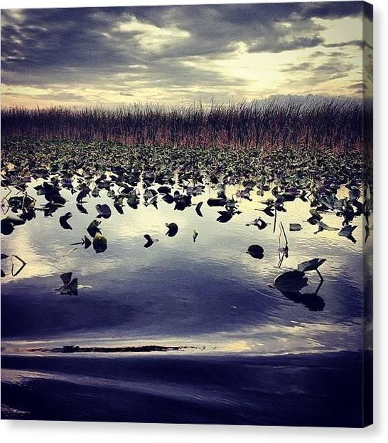 Everglades Canvas Print - #instagram_florida #flstateofmind by Jeremy Ferris