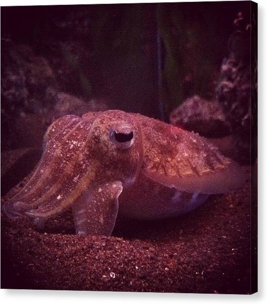 Squids Canvas Print - #instagrammers #igers #igtube by Mohamed Shafy