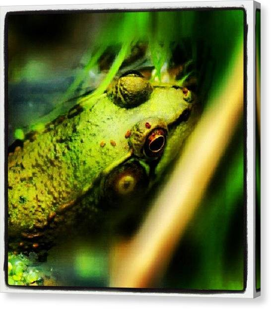 Prince Canvas Print - #instagramnature #frog #green #edit by Sikena Barley