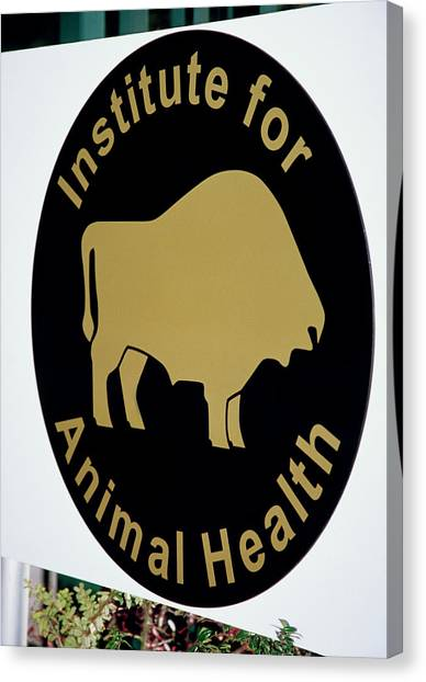 Institute For Animal Health Sign Canvas Print by David Hay Jones/science Photo Library