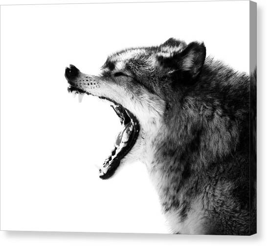Wolves Canvas Print - Intense Gray Wolf Portrait  by Stephanie McDowell