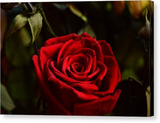 Red Roses Canvas Print - Intense Life by Jin Draven