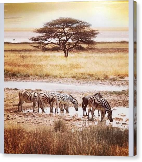 Beagles Canvas Print - International Zebra Day #zebra by Caitlin Beagle